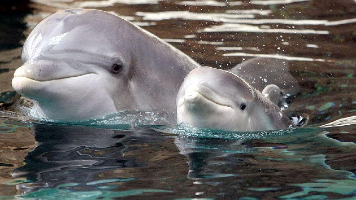 Con la muerte de al menos 8 animales comenzó la caza anual de delfines en Taiji