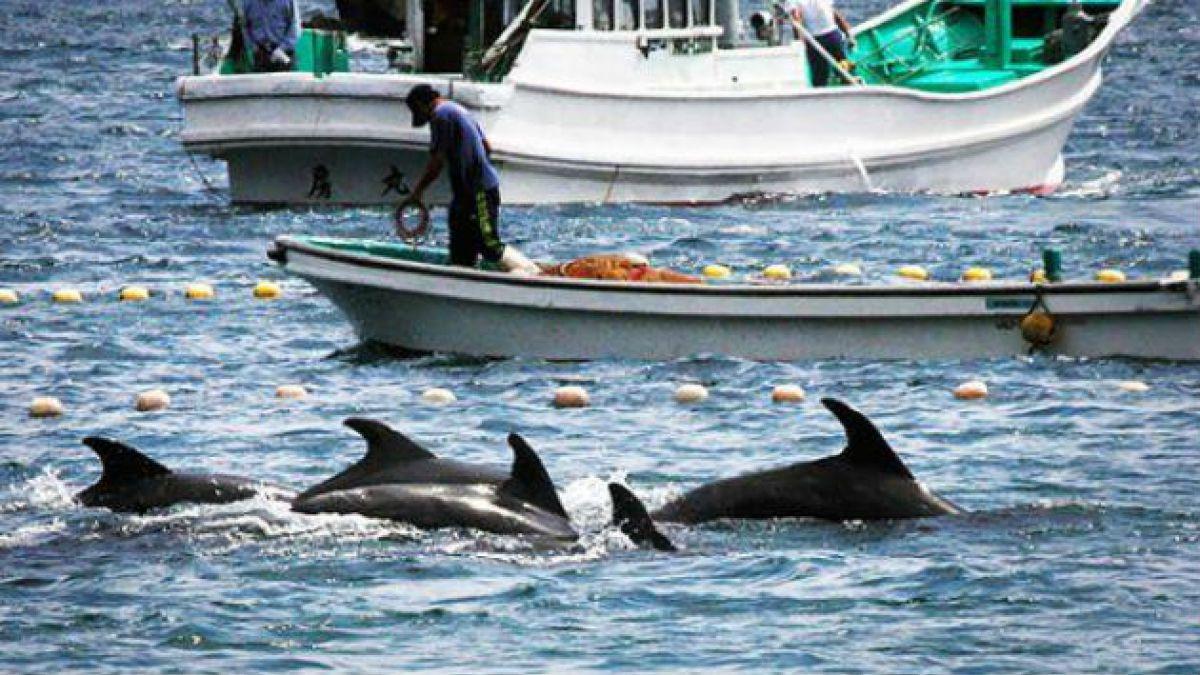 Activistas se preparan para la nueva temporada de caza de delfines en Taiji, Japón.