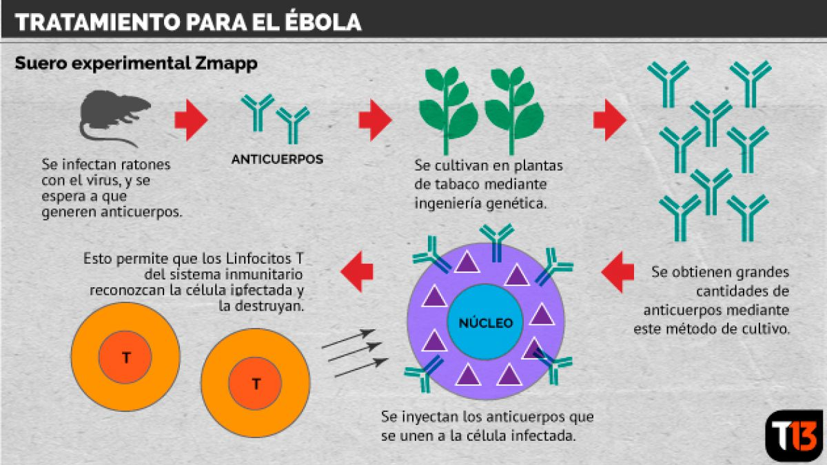 [Infografía] Así actúa el tratamiento que podría frenar el ébola
