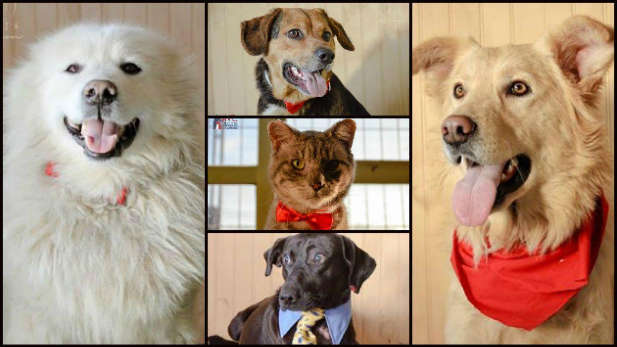 Mascotas sobrevivientes del incendio de Valparaíso buscan hogar