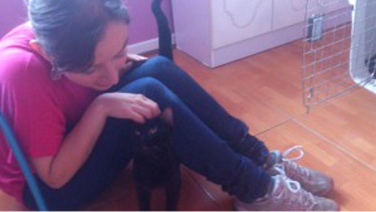 Doctora relata nueva vida de gato rescatado en tienda Ripley