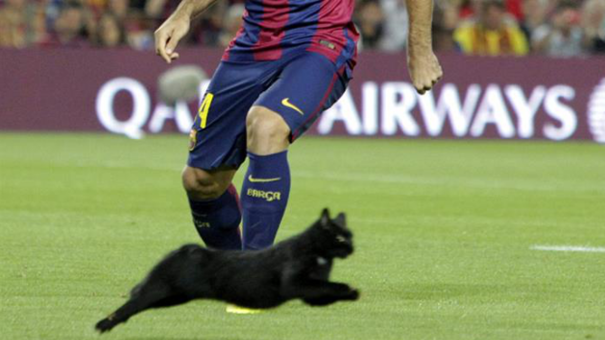 [FOTOS] Gato negro irrumpe en pleno partido del Barcelona ante el Elche
