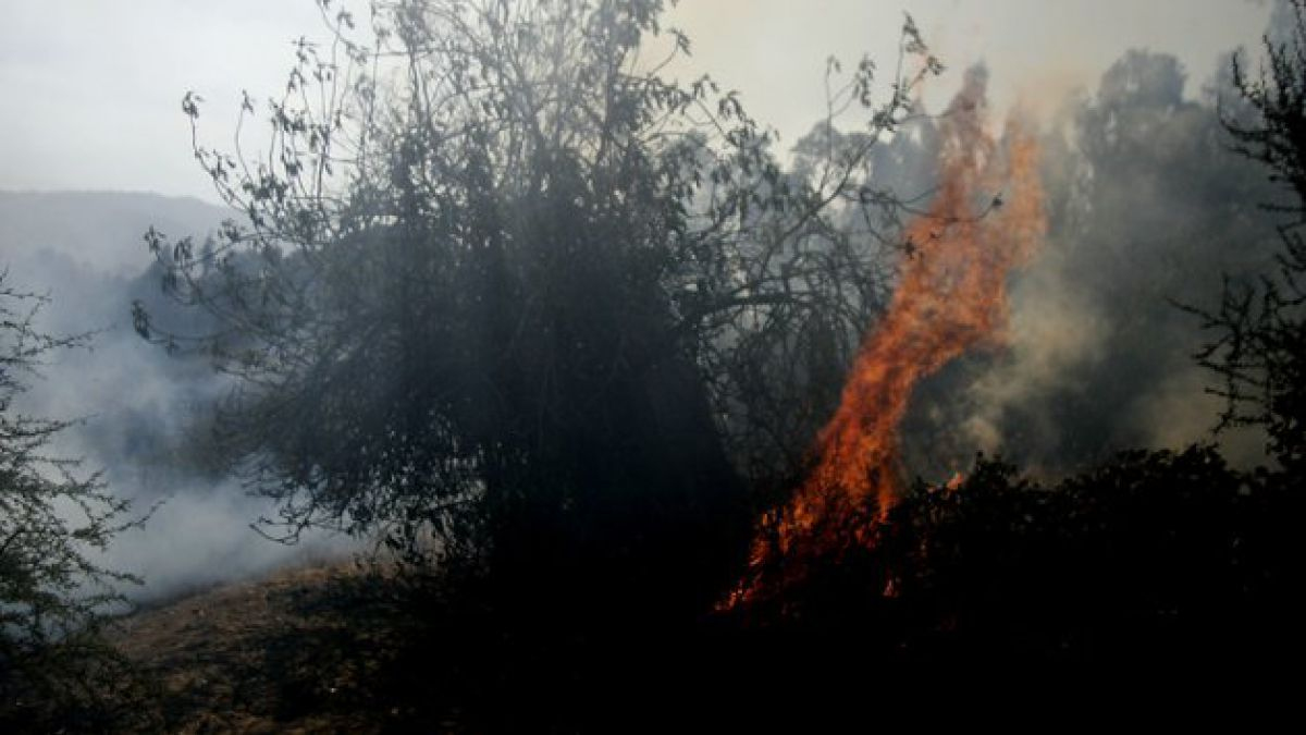 Declaran Alerta Roja en Algarrobo y El Quisco por incendio forestal