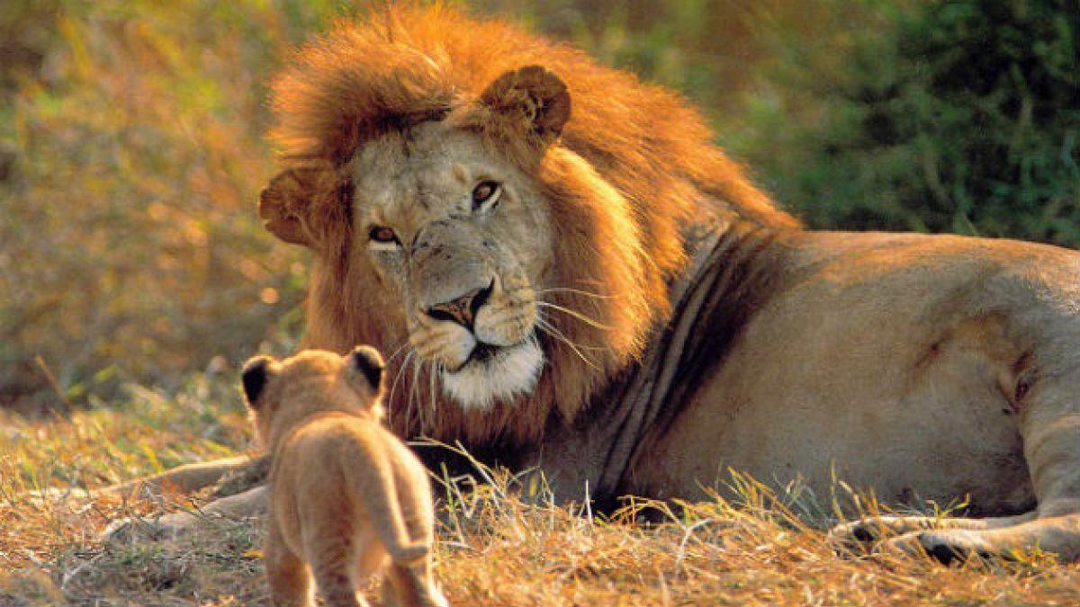 Los 18 animales que más necesitan ayuda, según informe WWF