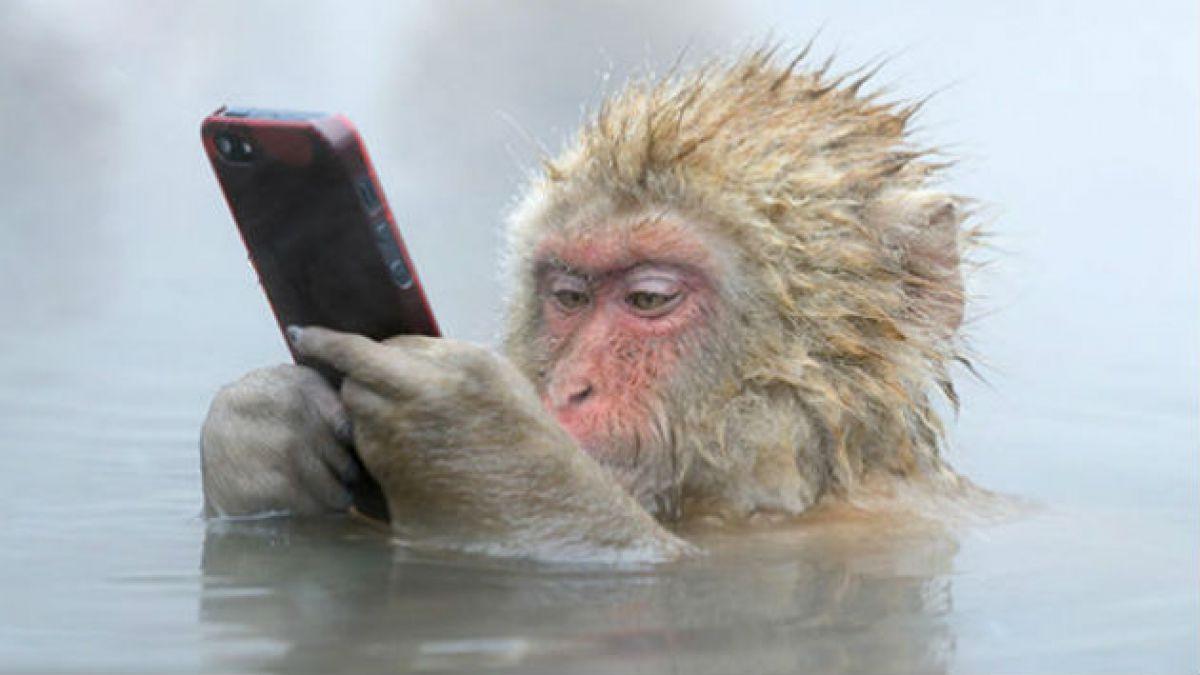 Qué hay detrás de esta fascinante foto del macaco y el iPhone