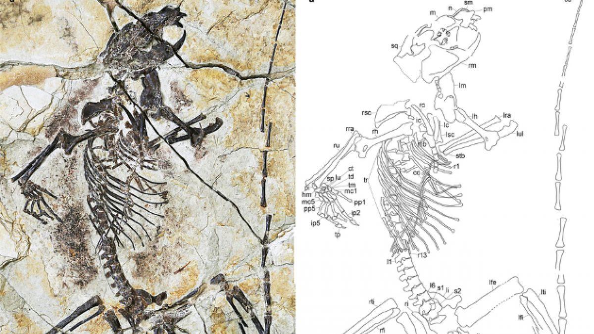 Descubren nuevos fósiles que cambian por completo el origen de los mamíferos