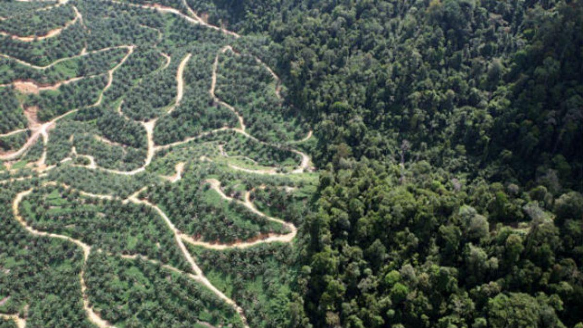 El mundo perdió más de 2 millones hectáreas de bosques en 12 años