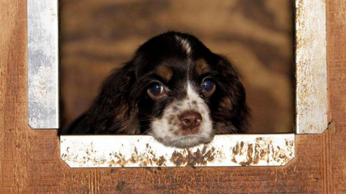 Razones para no comprar cachorros en las tiendas de mascotas