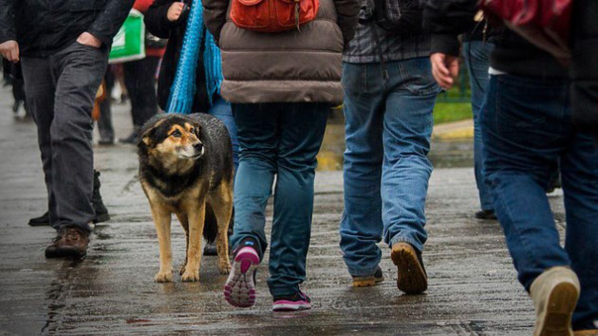 Proyecto de tenencia responsable de mascotas avanza a tercer trámite tras revisión en Comisión de Sa