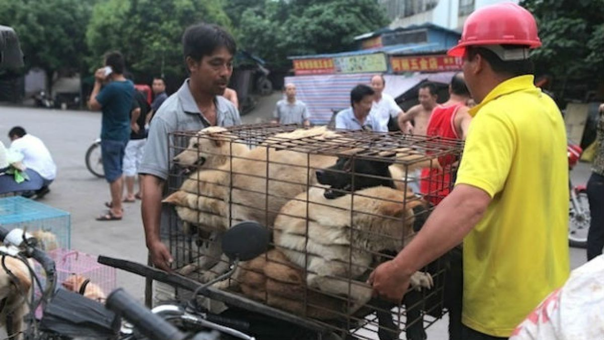 Por qué los activistas no pudieron detener la muerte de 10 mil perros en fiesta anual china