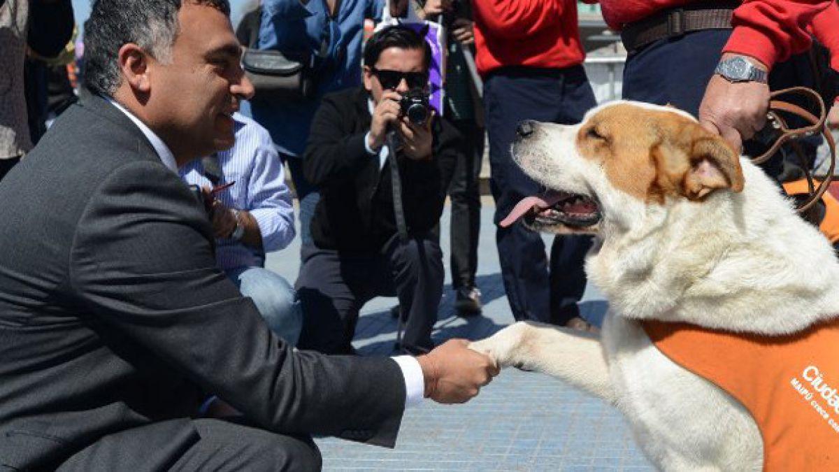 """Maipú rescata a perros callejeros para crear """"brigada de seguridad canina"""""""