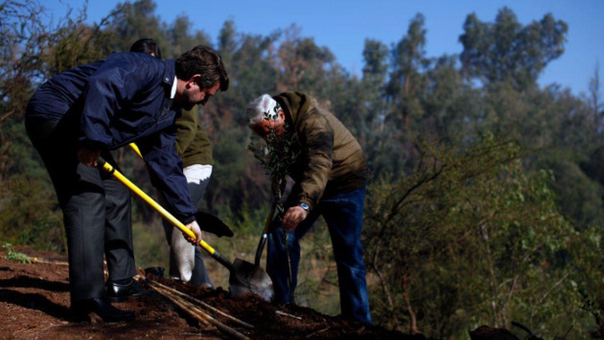 Plantarán 50 mil árboles en el Parque Metropolitano de Santiago