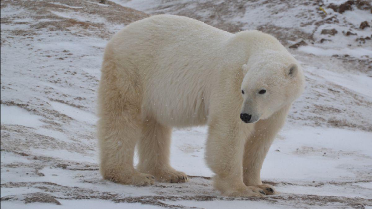 Cambio climático: 30% de las especies de animales corren riesgo de extinción, según informe de la ON