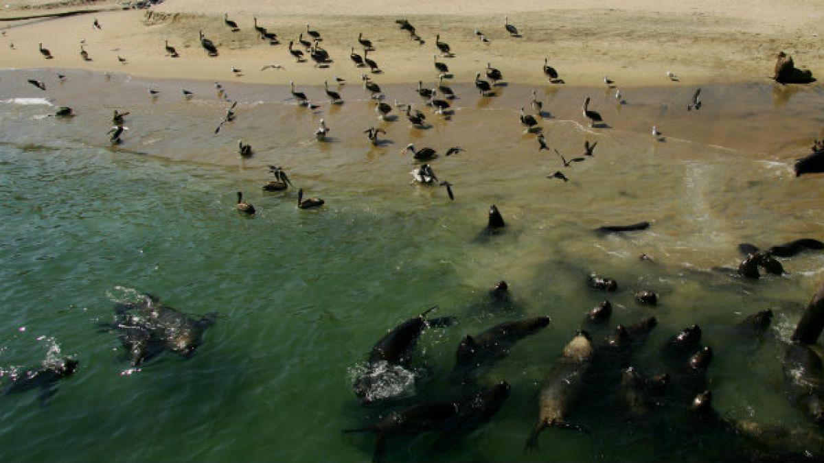 Estado compromete protección y regulación de áreas marinas en Chile