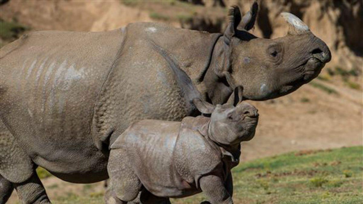 Justicia sudafricana condena a cazador de rinocerontes con 77 años de cárcel