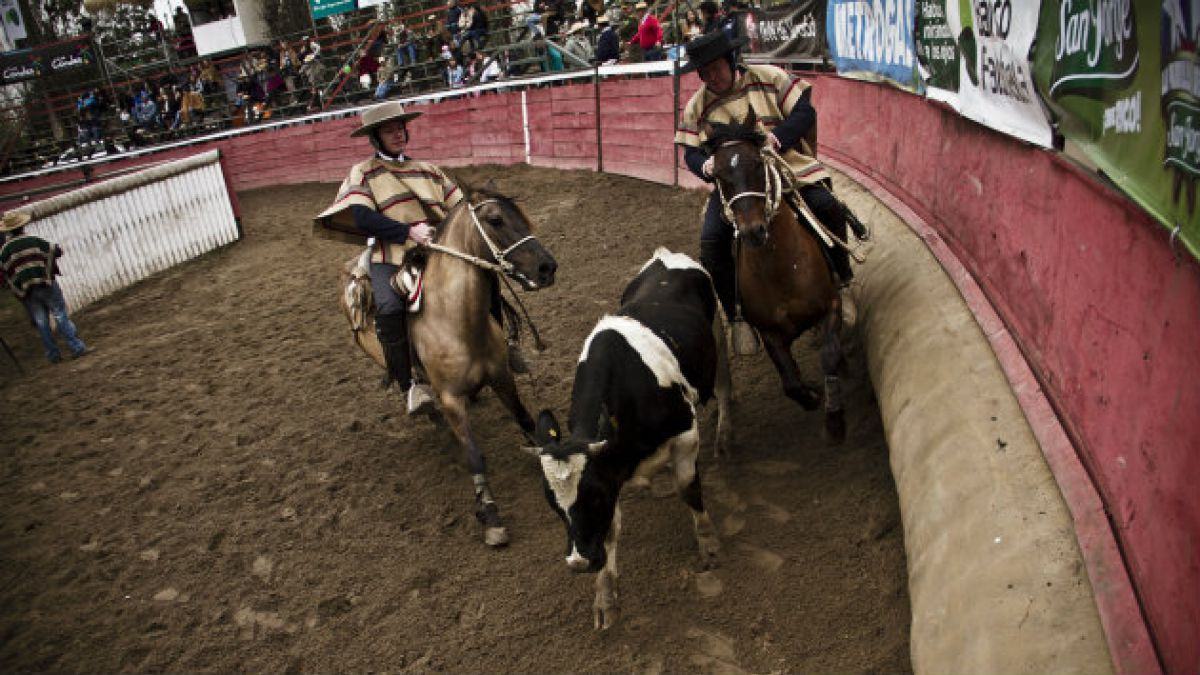 Organizaciones animalistas organizan Gran marcha contra el rodeo