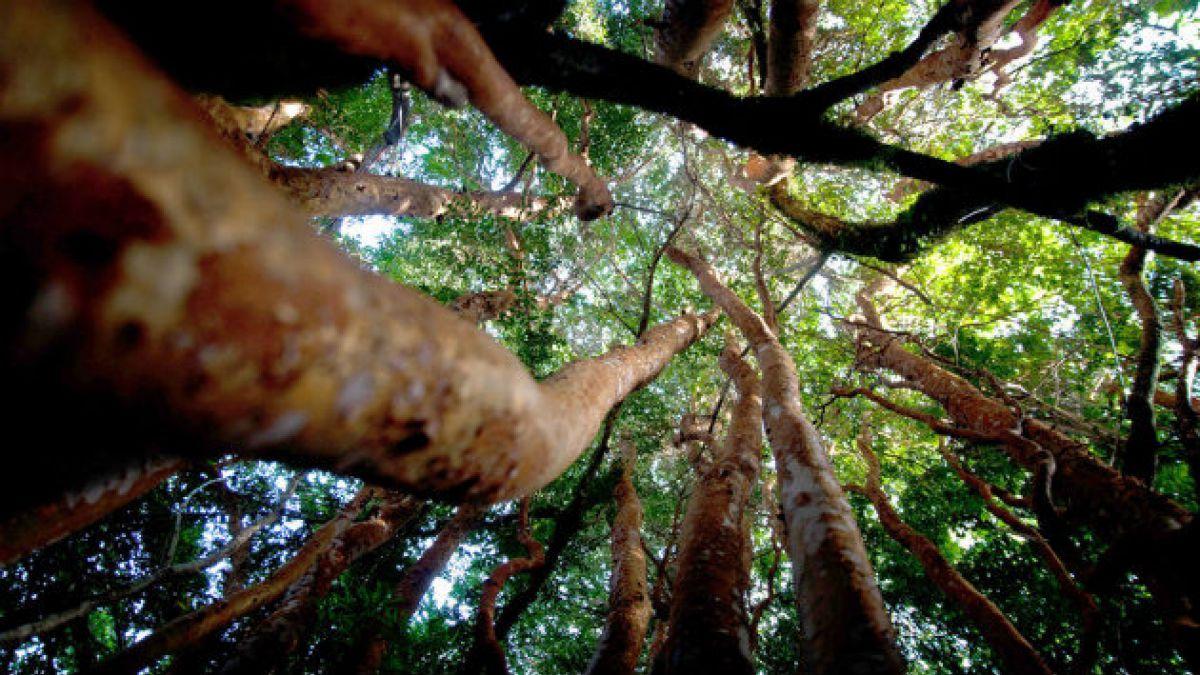 Medio Ambiente: Si la humanidad viviera como un chileno promedio, consumiría los recursos de 1,6 pla