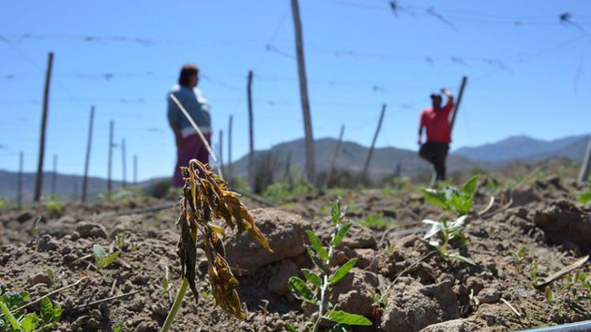 Los precios agrícolas mundiales caen a un mínimo en 7 años