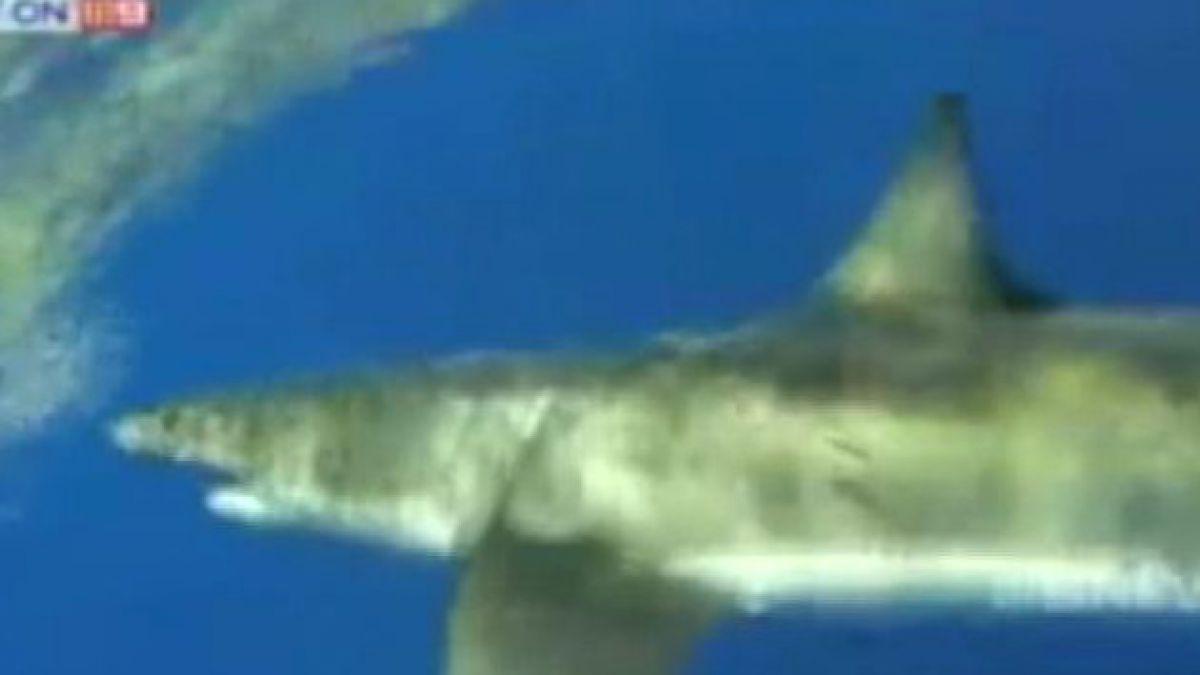 VIDEO: Divisan tiburón blanco de 5 metros en Australia
