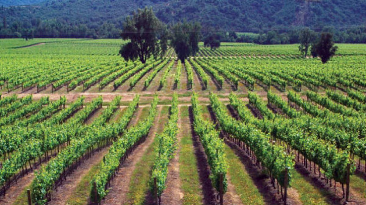 Proyectan en un 3% el aumento del consumo de vinos en Chile para el 2016
