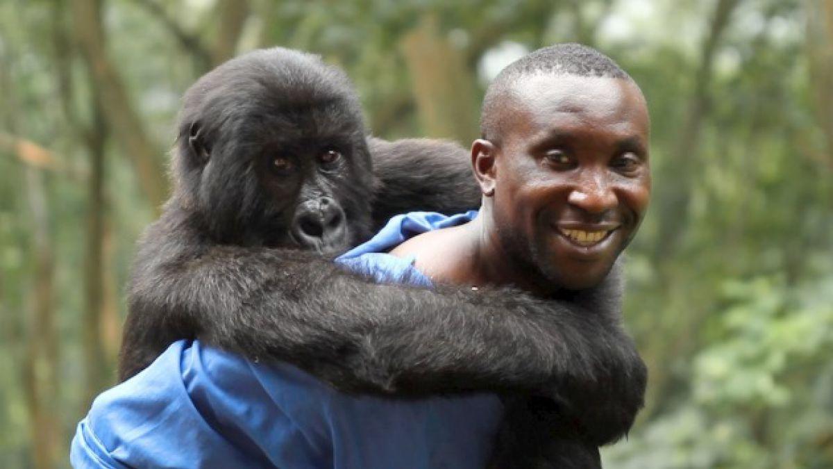 La caza furtiva de gorilas será la trama de un nuevo documental de Netflix