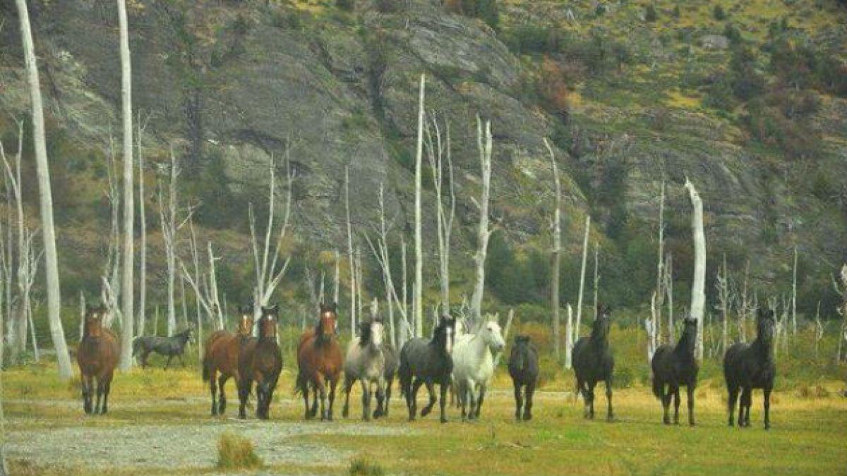 Principal acusado de caza ilegal de caballos en Yendegaia entrega su versión