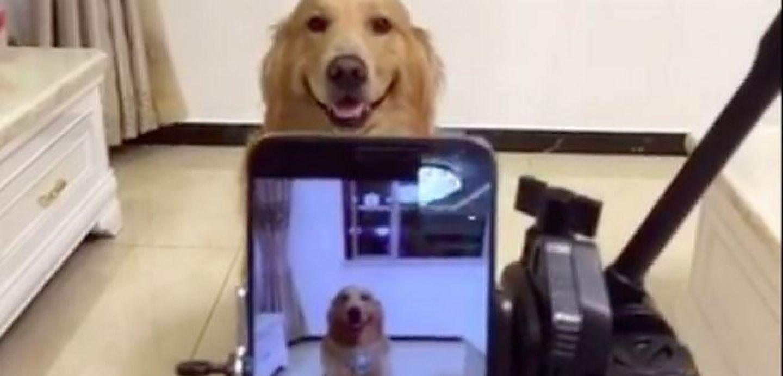 [VIDEO] Este perro sabe sonreír a la cámara