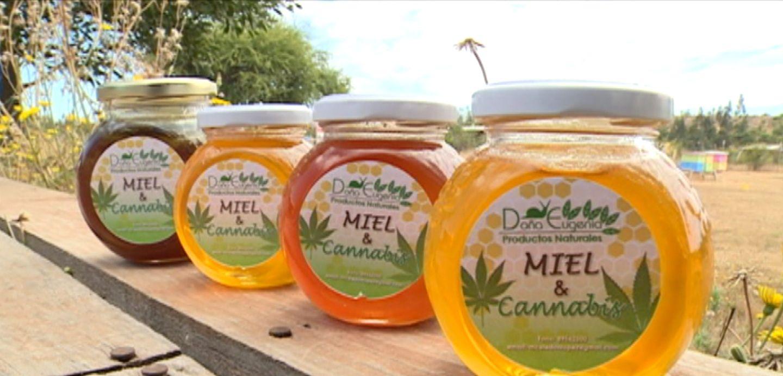Miel y aceite de cannabis: Una combinación saludable   Tele 13