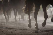 Sacrifican a 36 caballos de carrera infectados con enfermedad mortal para los humanos