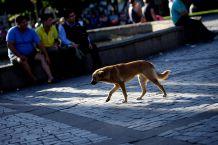Cada 27 de julio se celebra el Día Internacional del Perro Callejero