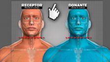 [Interactivo] Estos son los pasos planificados para el trasplante de cabeza