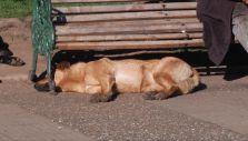 Coyhaique sin perros vagos: ¿Cuáles son las alternativas para controlar estos animales?