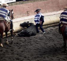Proyecto de ley busca instaurar el Día Nacional del Rodeo