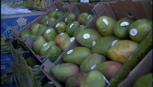 [VIDEO] Mango peruano irrumpe en el mercado nacional