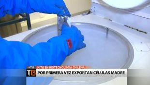 [T13] Hito en biotecnología: Chile se suma a la exportación de células madre