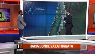 Fragata Portuguesa: ¿Qué tan peligrosas son para el ser humano?