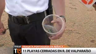 11 playas cerradas en la quinta región por presencia Fragata Portuguesa
