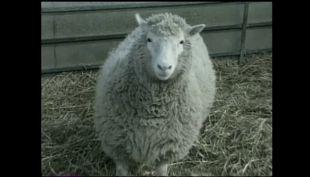 A 20 años de la clonación de la oveja Dolly