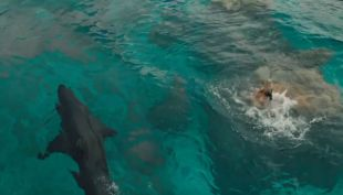 [VIDEO] The shallows, el filme que enfrenta a Blake Lively con el brutal ataque de un tiburón