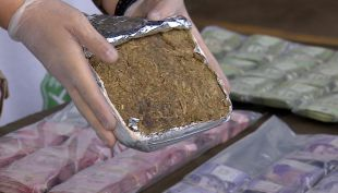 Cripy: Los detalles de la llegada de la súper marihuana a Chile