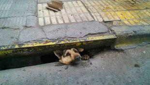 [VIDEO] Argentina: Rescatan a perro que estuvo atrapado cuatro días en alcantarilla