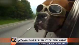[VIDEO] ¿Cómo llevar de forma segura las mascotas en el auto?