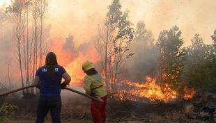 Fedetur e impacto por incendios forestales: Tenemos que trabajar para reactivar el turismo rápido