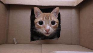 [VIDEO] Crea un laberinto con 50 cajas de cartón para sus gatos