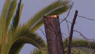 Polémica en Las Condes por poda de árboles