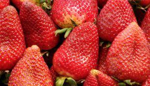 [VIDEO] Frutas y verduras bajarían sus precios esta temporada