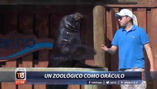 [VIDEO] Rusia 2018: Un zoológico como oráculo