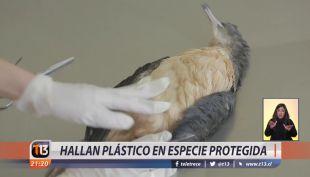 [VIDEO] Hallan plástico en especie protegida