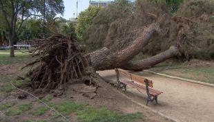 [VIDEO] Preocupación por caída de árboles en Santiago