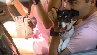[VIDEO] Vence plazo para inscribir mascotas: ¿Cómo hacerlo?